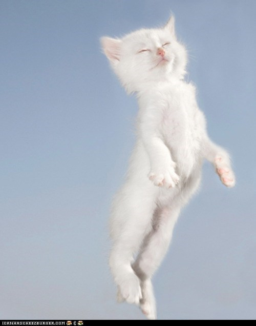 cyoot kitteh of teh day floating in the air sleeping white - 5775245056