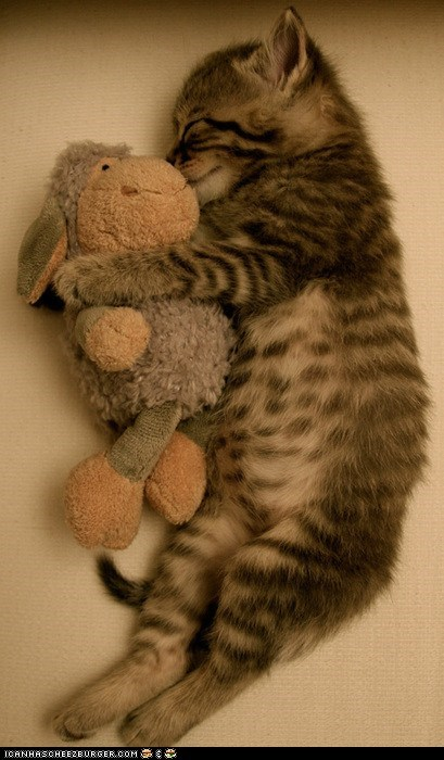 cuddles,cyoot kitteh of teh day,sheep,sleeping,spooning,stuffed animals