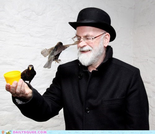 acting like animals amazing bird birds Hall of Fame real socializing sparrow sparrows tame terry pratchett - 5775361792