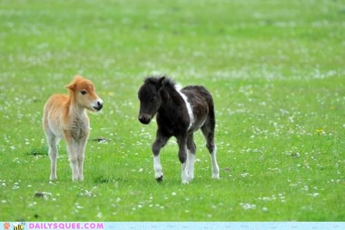 Babies baby foal foals Hall of Fame horse horses pun puns - 5775413504