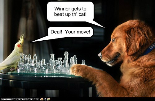 Winner gets to beat up th' cat! Deal! Your move!