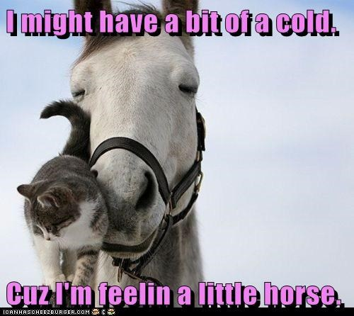pun cold nose horses Cats hoarse - 5775523328