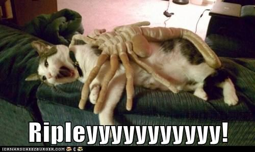 alien Aliens best of the week caption captioned cat Movie ripley shouting - 5775562240
