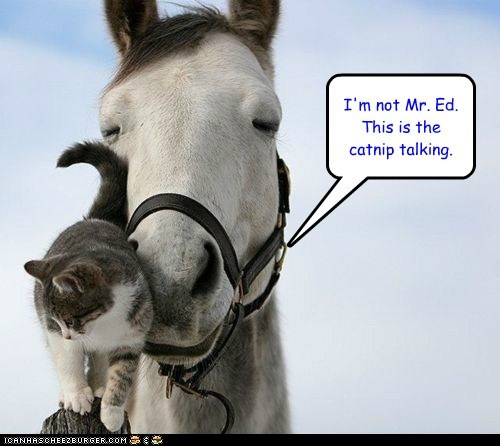 caption captioned cat catnip horse mr ed not talking - 5775864320