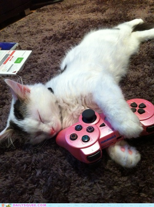 baby,cat,controller,cuddling,favorite,Hall of Fame,kitten,pink,playstation 3,reader squees,sleeping,toy