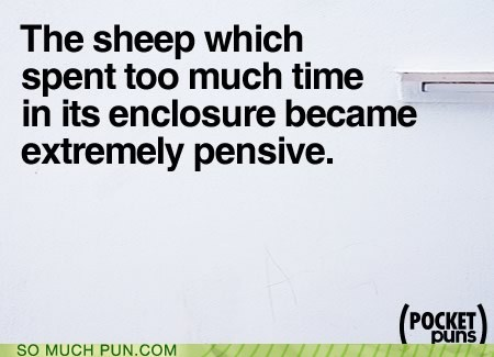 cliché enclosure lamb pen pensive sheep - 5776864512