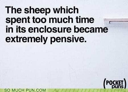 cliché enclosure lamb pen pensive sheep - 5776864512