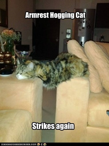 again,armrest,caption,captioned,cat,hog,hogging,strike