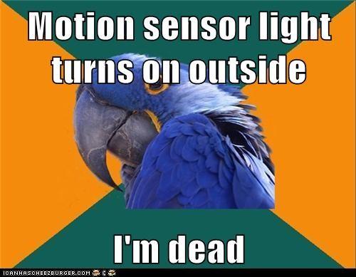 birds,dead,lights,Memes,motion sensor,murderers,paranoid,Paranoid Parrot,parrots