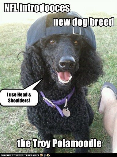 NFL introdooces new dog breed the Troy Polamoodle I use Head & Shoulders!