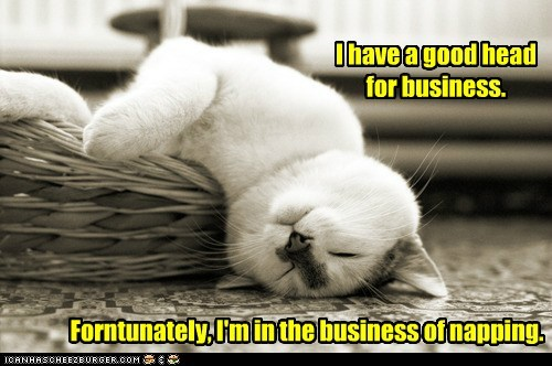 business caption captioned cat fortunately good head napping pun