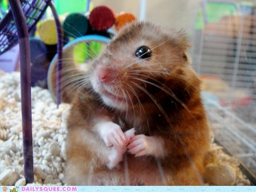 cleaning feet hamster squee - 5778612480