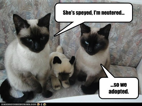 She's speyed, I'm neutered... ...so we adopted.