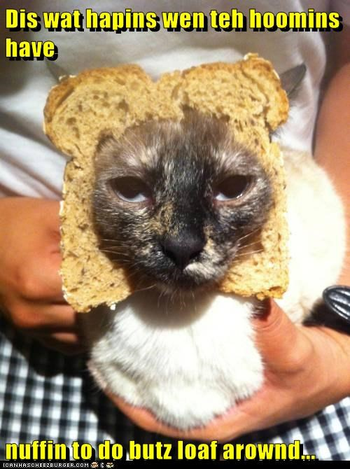 around bread breading caption captioned cat happens humans loaf pun this what when