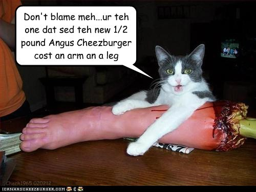 Cheezburger Image 5779307264