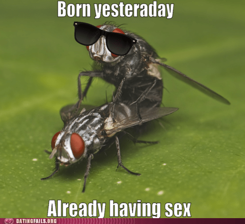 fly,insects,sexy times,swag,yesterday