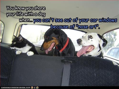 "You know you share your life with a dog when... you can't see out of your car windows because of ""nose art""."