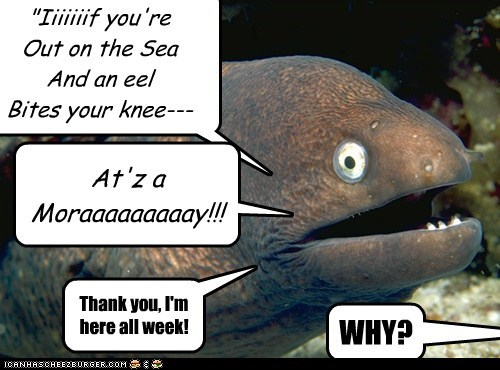 Bad Joke Eel,bad jokes,eels,jokes,lyrics,moray,puns,Songs,when the moon hits your eye,why