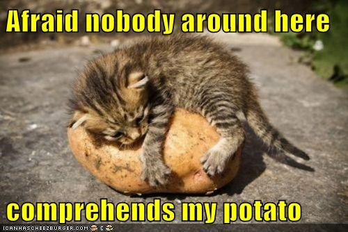 cat Cats comprehends friend Hall of Fame hug kitten lolcat love potato potatoes understand wtf - 5779874304