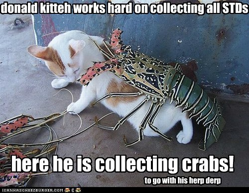 donald kitteh works hard on collecting all STDs here he is collecting crabs! to go with his herp derp