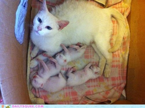 Babies baby cat Cats family Hall of Fame happy kitten litter mother newborn parent proud - 5779927040