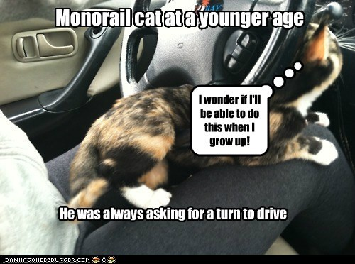 Monorail cat at a younger age He was always asking for a turn to drive I wonder if I'll be able to do this when I grow up!