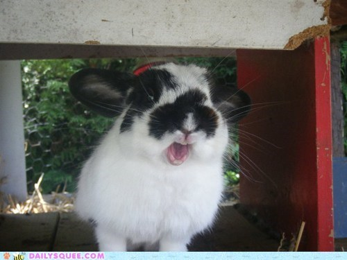 bunny happy bunday mouth reader squees teeth tongue yawn - 5780206592