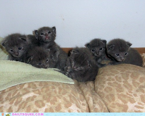 Babies,baby,cat,Cats,group,Hall of Fame,kitten,Photo,reader squees,six,unbearably squee