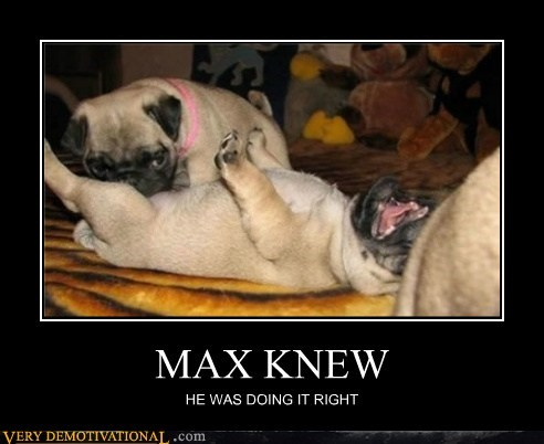 dogs hilarious max sexy times - 5780936704