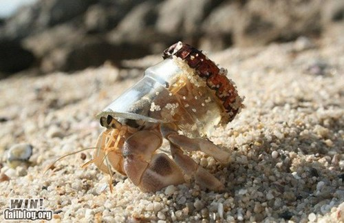 animal,beach,bottle,crab,recycle,shell,trash