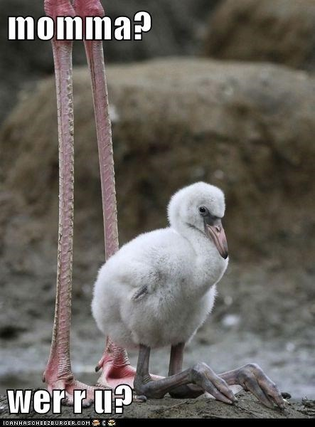 baby,bird,flamingo,lost,momma,mother,short,tall,where are you