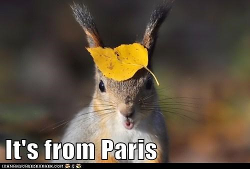 beret,best of the week,captions,fashion,Hall of Fame,hat,hats,paris,squirrel,squirrels,style
