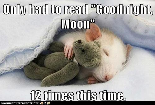 best of the week,blanket,blankets,goodnight,goodnight moon,Hall of Fame,mouse,rats,sleeping,sleeping squee,teddy bear
