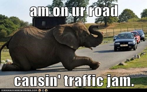 causing,elephant,im-in-your,lying down,middle of the road,Traffic Jam