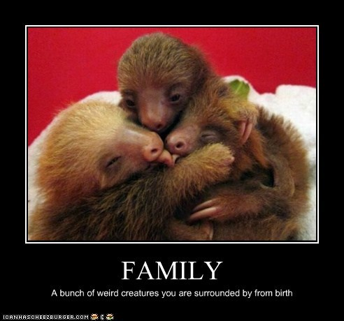 best of the week cuddle cute families family group hug Hall of Fame hugs sloths squee weird
