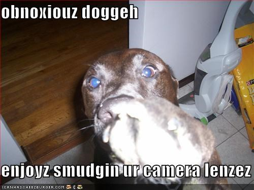 Cheezburger Image 578223360