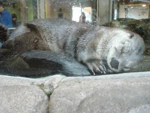 Adorable Animal Otterly Adorable seattle aquarium - 5782319104