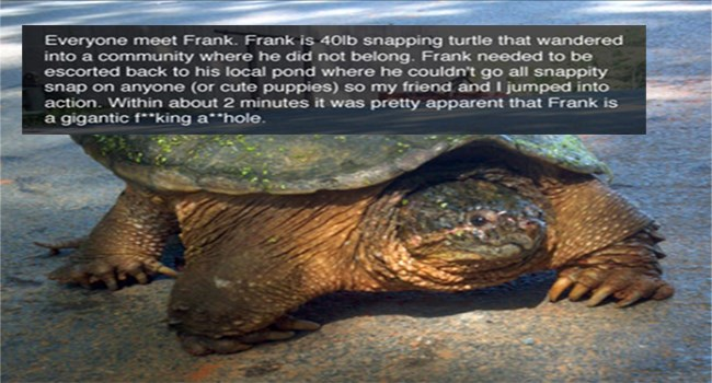 funny stories snapping turtle icanhascheezburger turtles story funny - 5782533