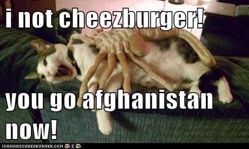 Cheezburger Image 5782635520