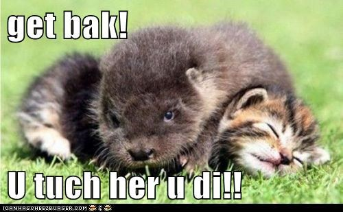 angry cat get back kitten kittey kitty mine otter possessive threat