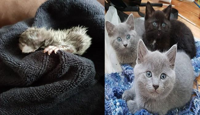 kitten cute grown up cute kittens - 5782789