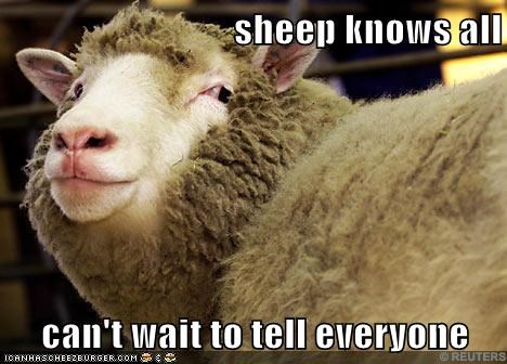 cant-wait everyone he knows saw what you did there sheep smirk tell
