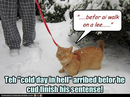 """Teh """"cold day in hell"""" arribed befor he cud finish his sentense! """".....befor ai walk on a lee......"""""""