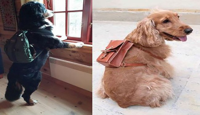 dogs wearing backpacks
