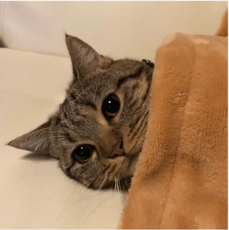 cute cute cats cats sleeping Cats sleeping - 5783301