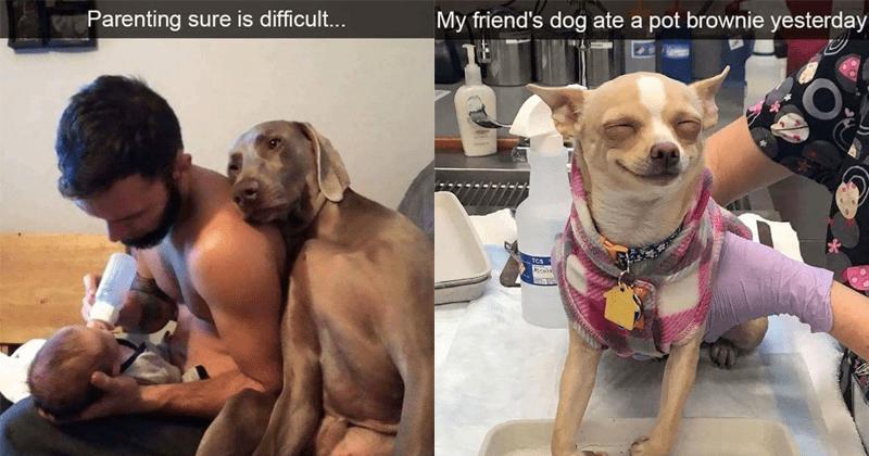 Dog snapsm dog snapchat, doggos, pets , huskies, puppies.