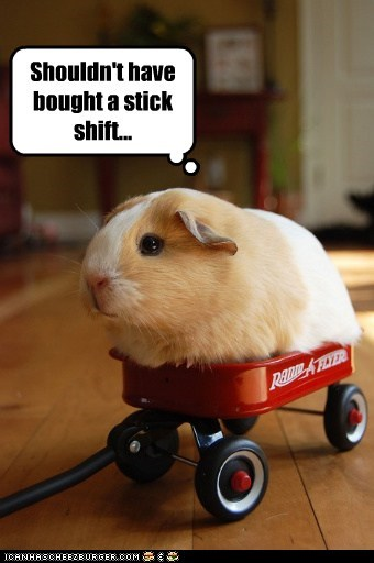 guinea pig,red wagon,stick shift,wagon