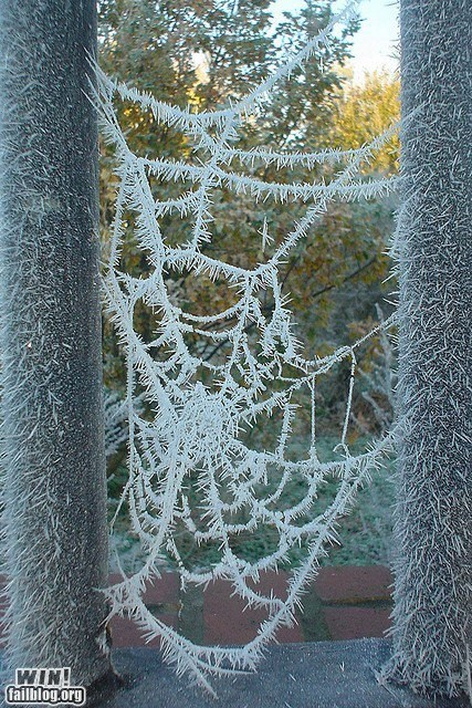 cold,frozen,g rated,ice,nature,spider,web,win