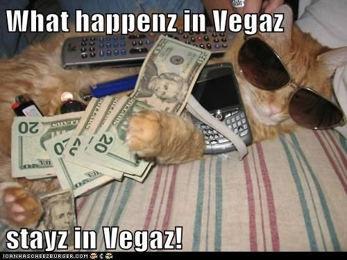caption captioned cat happens las vegas motto slogan vegas - 5783777280