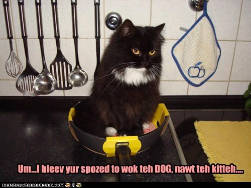 Um...I bleev yur spozed to wok teh DOG, nawt teh kitteh....